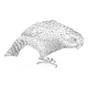 Kakapo (Strigops habroptila)